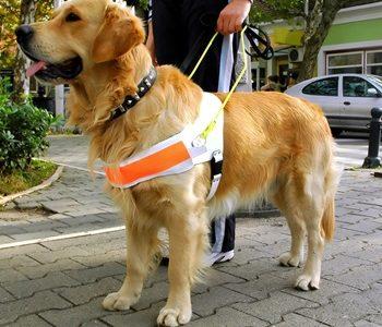 Dog story small RHS